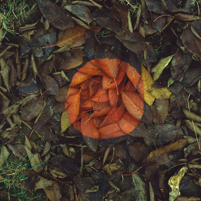 Andy Goldsworthy - Red Leaf Patch