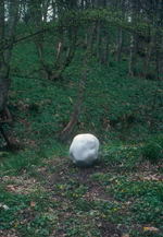 Andy Goldsworthy Digital Catalogue Home